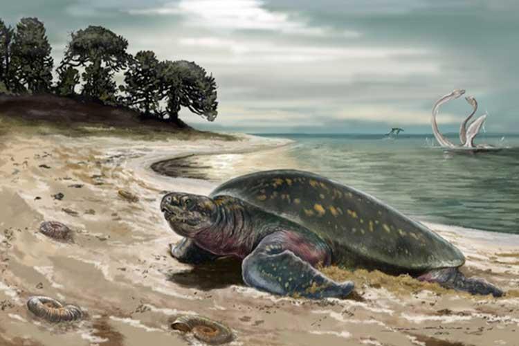 کشف قدیمی ترین فسیل لاک پشت دریایی