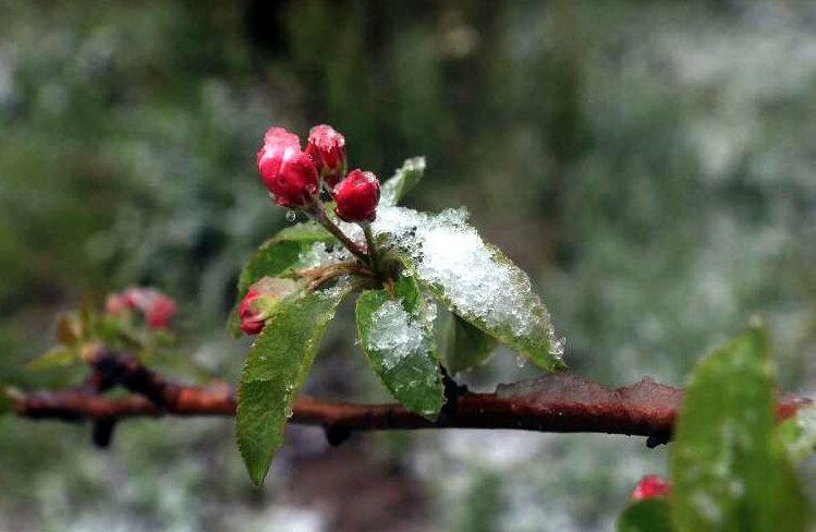 کشاورزان و دامداران اصفهان محصولات خود را بیمه کنند