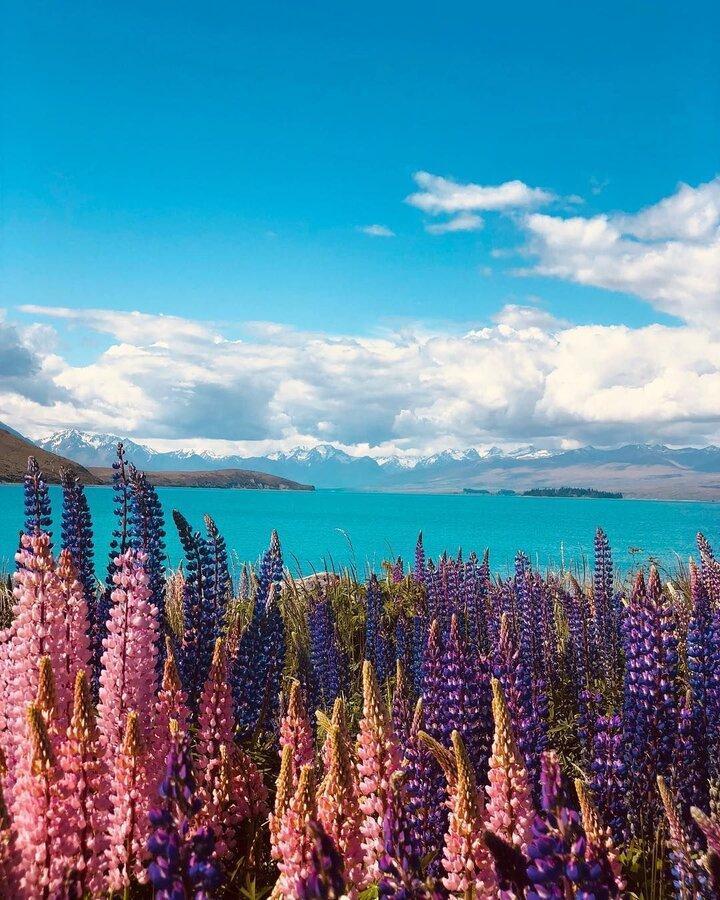 نیوزیلند و استرالیا حباب مسافرتی ایجاد می نمایند ، راه کارهای تازه برای سفر رفتن و فرار از کرونا