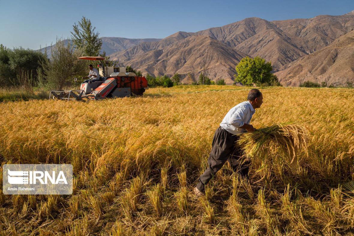 خبرنگاران اهمیت شبکه سازی در ترویج کشاورزی