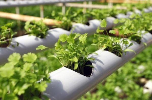 اجرای برنامه توسعه فناوری در زمینه طراحی گلخانه ها