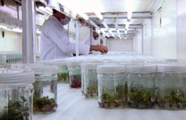 تدوین 30برنامه که به توسعه صادرات محصولات زیستی منتهی می گردد